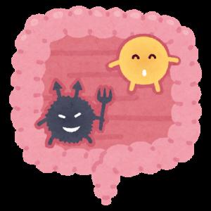 善玉菌と悪玉菌のいる腸